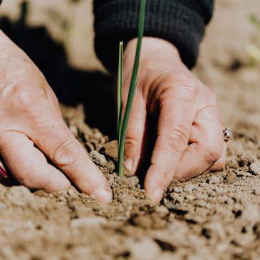 Avec ou sans l'aide des organismes vivants ? Le sol